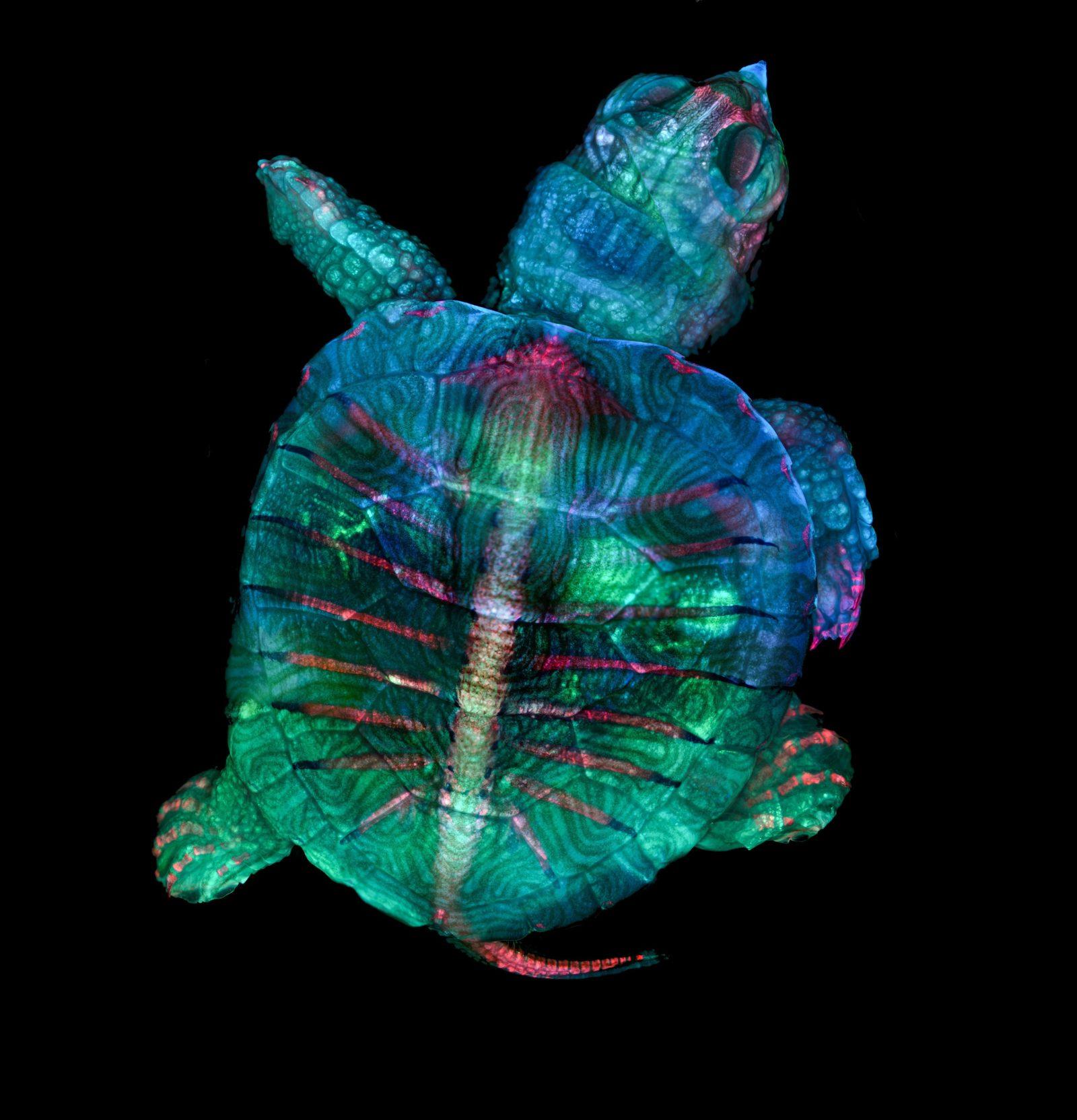 1-Zgoda_Turtle