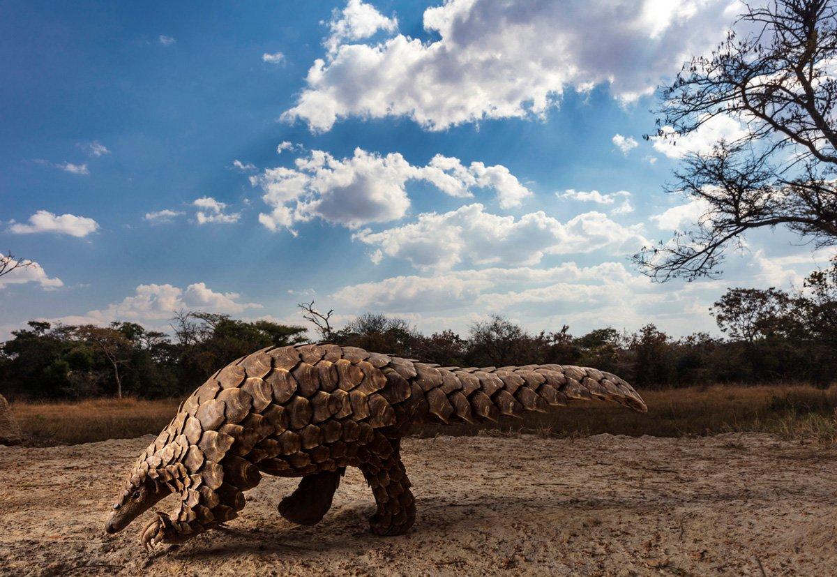 Brent Stirton - Sudáfrica - Wildlife
