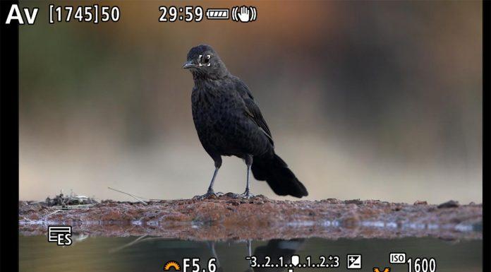 AF-Canon-EOS-R5-Liebana