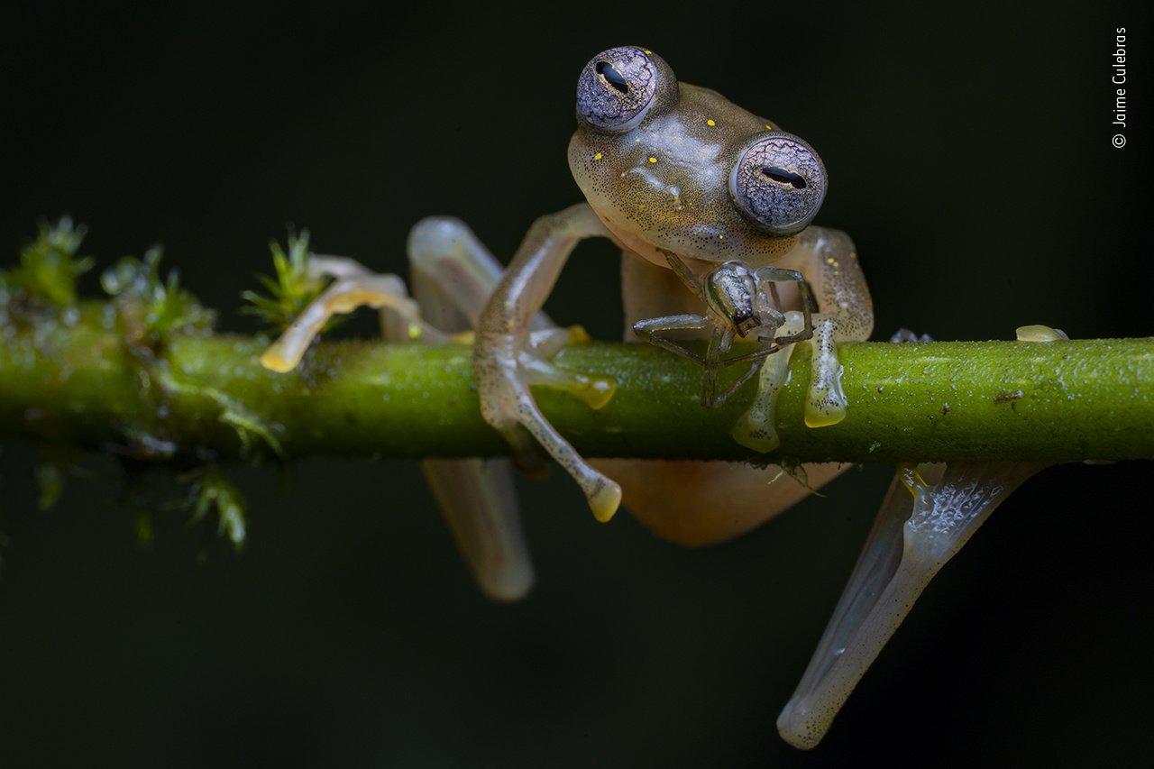 Jaime Culebras (España) – Ganador categoría anfibios y reptiles