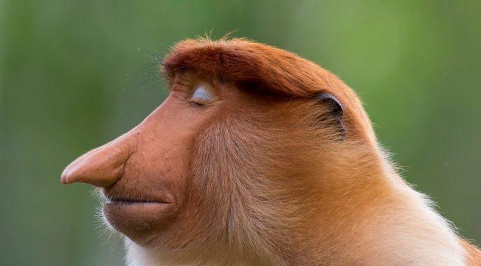 Mogens Trolle (Dinamarca) – Categoría retrato animal