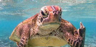Mark Fitzpatrick - Ganador absoluto y categoría Criaturas bajo el agua