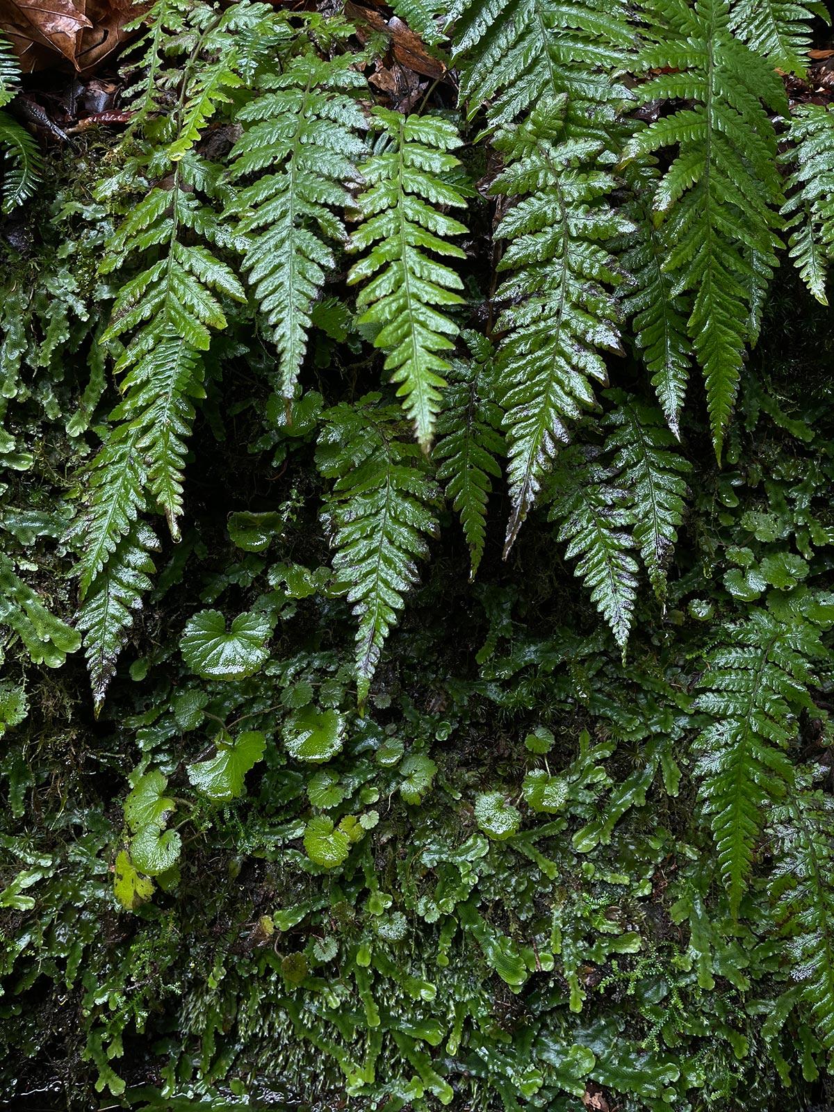 Oliver-Madeira-iPhone12-08