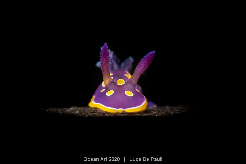 2nd-Nudibranchs