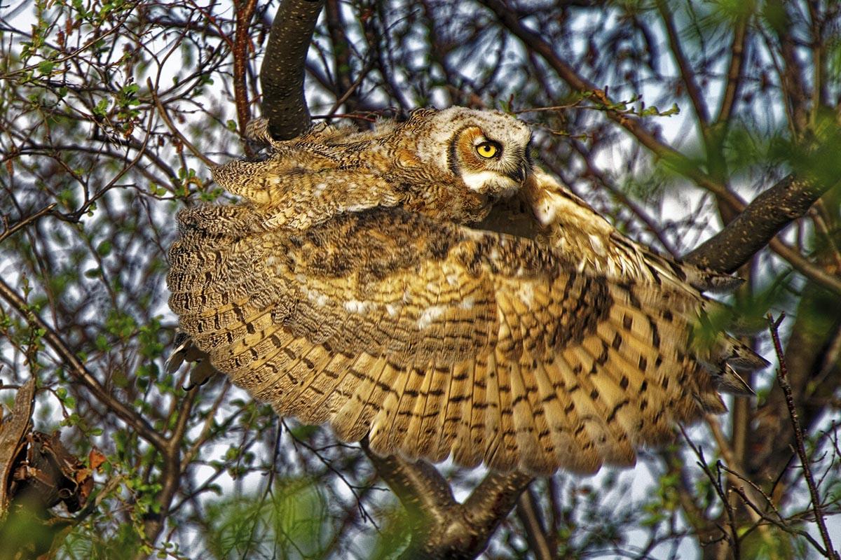 Dale Paul – Categoría Pájaros
