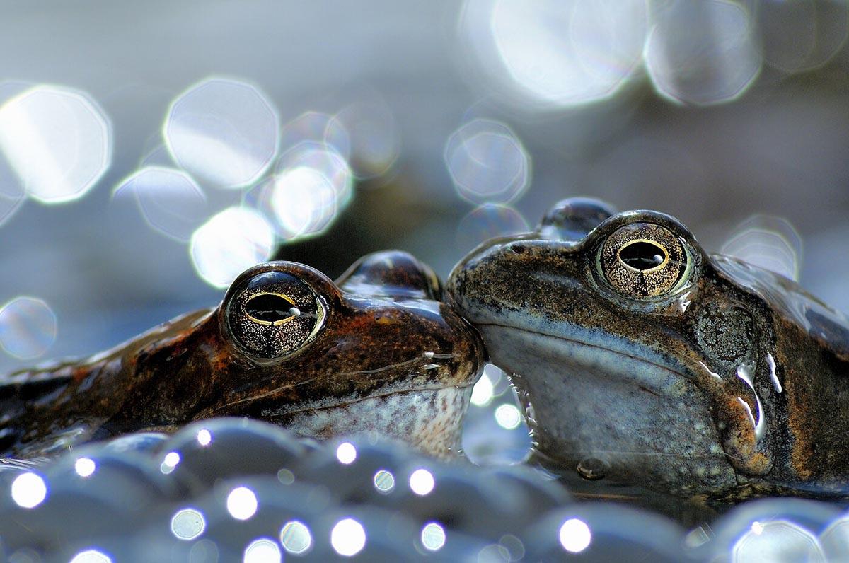 Vittorio Ricci – Categoría Anfibios y reptiles