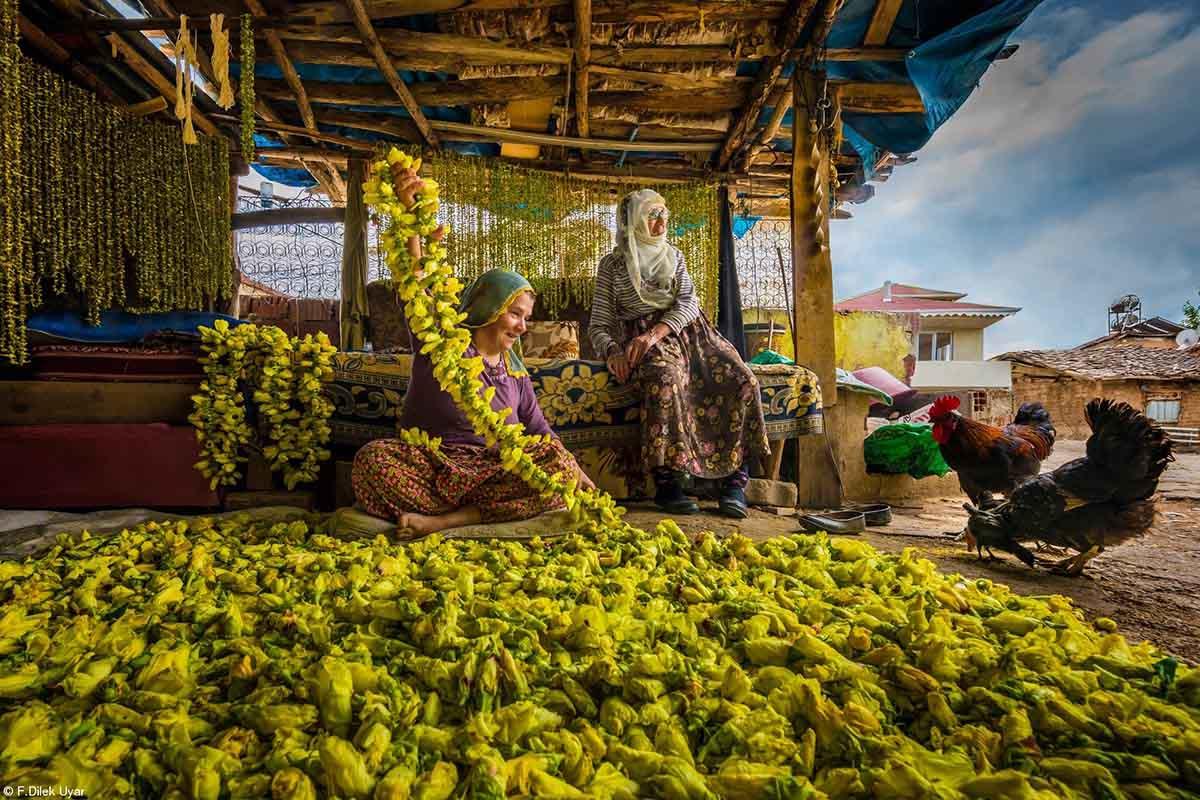 Bring Home the Harvest © F. Dilek Uyar