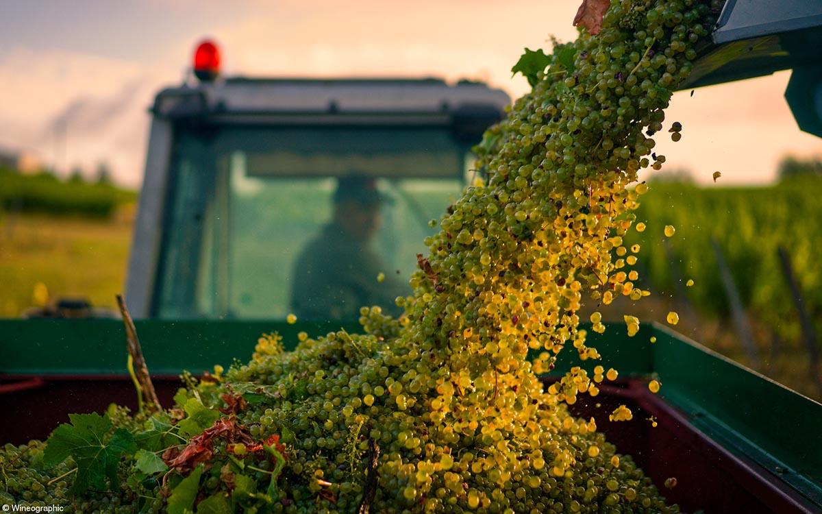 Errazuriz Wine Photographer of the Year – Produce © Oscar Oliveras